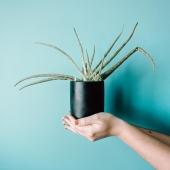 """L'Aloe è una sorta di """"guaritore naturale"""" ✨💚 utilizzato già dai popoli dell'antichità tra cui Egiziani, Assiri, Indiani, ecc. Molto celebre per le sue proprietà antinfiammatorie, lenitive e depuratici che puoi ritrovare nel nostro succo Premium Fruit Aloe ✳️🧃✨   •SCONTO -20% (sul prezzo unitario) dall' 11 al 17 GENNAIO  •SPEDIZIONE GRATIS per ordini da 89€  •ACQUISTA 4 CONFEZIONI e RISPARMIA   #premiumfruit #lasaluteènellespremute !!!"""