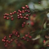 MIRTILLO ROSSO ❣️ - Antiossidante   Questi frutti risultano essere tra i prodotti alimentari più ricchi di composti con azione antiossidante presenti in natura 🌿✨  Tale azione è svolta in particolare dalla presenza di ✨Quercitina✨: flavonoide conosciuto per il suo potere antiossidante e antitumorale 💥  Premiun Fruit Mirtillo Rosso la tua carica di antiossidanti!! ❣️  #premiumfruit #premiumfruitmirtillorosso #succodifrutta #succhidifrutta #succofrutta #succodimirtillorosso #succomirtillorosso #succomirtillirossi #spremutedifrutta #spremutadifrutta #succhinaturali #succonaturale  #succosenzazucchero #succhisenzazucchero #spremutasenzazucchero #spremutasenzazuccheri #spremutanaturale #spremutenaturali  #antiox #antiossidante #antiossidantenaturale #succoantiox #mirtillorosso #mirtillirossi #cranberries #cranberry #cranberryjuice #juicefruit #freshfruit #fruit