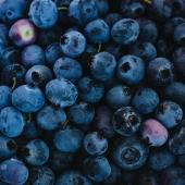 MIRTILLO NERO ▪️ - Alleato del Microcircolo   I mirtilli neri contengono la mirtillina che è un'ottima alleata per il sistema circolatorio ✨ riduce, infatti, la permeabilità dei capillari, rafforzando i vasi sanguigni e migliorandone l'elasticità 😌 Il succo 100% Mirtillo Nero di Premium Fruit contiene tutte le proprietà di queste salutari bacche 🖤   #premiumfruit #premiumfruitmirtillonero  #succodifrutta #succhidifrutta #succofrutta #succodimirtillonero #succomirtillonero #succomelagrana #spremutedifrutta #spremutadifrutta #succhinaturali #succonaturale #succosenzazucchero #succhisenzazucchero #spremutasenzazucchero #spremutasenzazuccheri #spremutanaturale #spremutenaturali #mirtillonero #mirtillineri #antiox #antiossidante #succoantiox #succoantiossidante #microcircolo #healthyfood #juicing #freshjuice #blackberry #blackberries